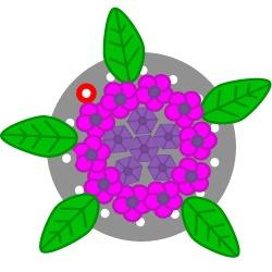 Hydrangea Flower Ring Tutorial Tutorial Step 14