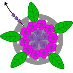 Hydrangea Flower Ring Tutorial Tutorial Step 15