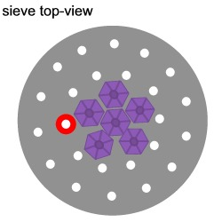 Hydrangea Flower Ring Tutorial Tutorial Step 7